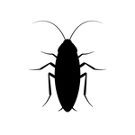 Cockroach Pest Control